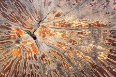 Tronc d'arbre avec le beau modèle photo libre de droits