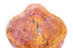 Tronc d'arbre avec le beau modèle images stock