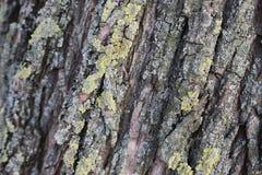 Tronc d'arbre avec le fond de texture de modèle de mousse image stock