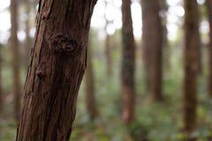 Tronc d'arbre dans une forêt au Japon photos stock