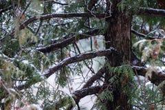 Tronc d'arbre de neige Photographie stock libre de droits