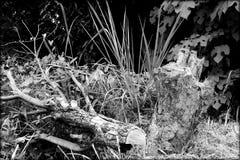 Tronc d'arbre de ruine Photographie stock