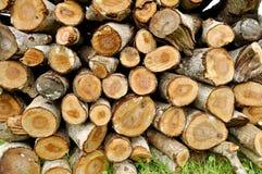 Tronc d'arbre de texture photos stock