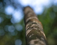 Tronc d'arbre en bambou Photographie stock