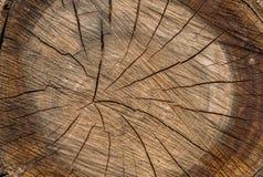 Tronc d'arbre en bois de coupe de texture Image libre de droits