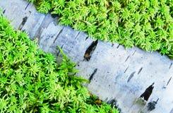 Tronc d'arbre enterré dans la mousse photographie stock