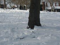Tronc d'arbre entouré par la neige dans Kent, Angleterre Photographie stock libre de droits