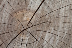 Tronc d'arbre, fond en bois en coupe Images stock