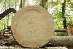 Tronc d'arbre frais de coupe dans la forêt, travail de bois de charpente Images libres de droits