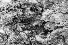 Tronc d'arbre mort putréfié - noir et blanc - texture abstraite de fond Photos libres de droits