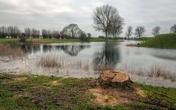 Tronc d'arbre scié Image stock