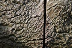Tronc d'arbre scié Photographie stock libre de droits