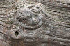 Tronc d'arbre sec avec des écrous Image libre de droits
