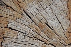 Tronc d'arbre sec superficiel par les agents âgé Images libres de droits