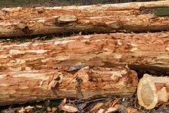 Tronc d'arbre sur le plancher avec l'écorce épluchée Photographie stock libre de droits