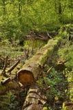 Tronc d'arbre tombé au-dessus de vallée de Peklo de crique de potok de Robecsky au printemps dans le kraj tchèque de Machuv de se Images stock