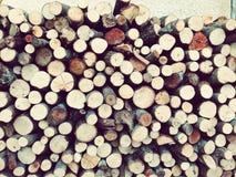 Tronc d'arbre tout dans son endroit Photos stock