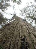 Tronc d'un arbre ?norme image libre de droits
