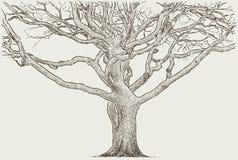 Tronc d'un vieil arbre illustration stock