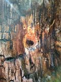 Tronc d'un vieil arbre avec une cavité au coeur de forme photo stock