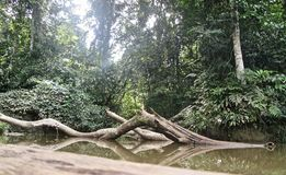 Tronc dans la jungle images libres de droits