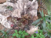 Tronc dans le jardin Image stock