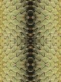 Tronc de cactus avec de grands piquants Photos libres de droits