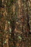 Tronc de Cypress Photo libre de droits