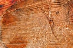 Tronc de Cypress Photographie stock