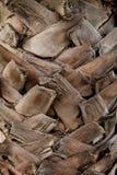 Tronc de palmier Photographie stock libre de droits