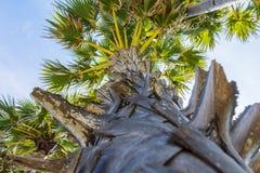 Tronc de palmier avec la feuille Photographie stock