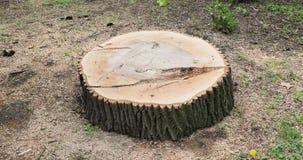 Tronc de tronçon d'arbre de coupe de hêtre de chêne, détail, 360 banque de vidéos