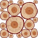 Tronc de vecteur et anneaux d'arbre Illustration de couleur illustration stock