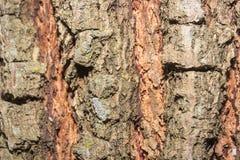 Tronc en bois Image libre de droits
