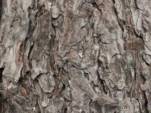 Tronc en bois d'écorce de texture images stock