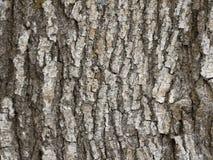 Tronc en bois de texture photos stock