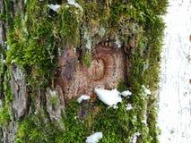 Tronc moussu en hiver photographie stock libre de droits