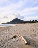 Tronc sur la plage images stock