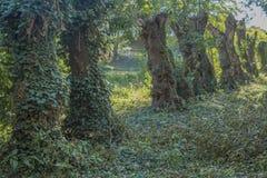 Tronchi in conformità con vegetazione verde fotografia stock