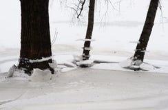 Tronchi degli alberi all'inverno fotografia stock libera da diritti