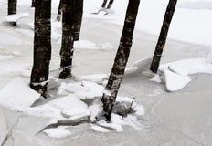 Tronchi degli alberi all'inverno fotografia stock