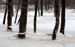 Tronchi degli alberi all'inverno immagini stock