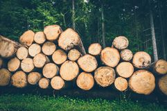 Tronchi degli alberi con il diametro denotato del tronco di albero fotografia stock libera da diritti