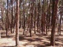 tronchi degli alberi e dell'erba gialla fotografia stock