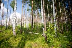 Tronchi degli alberi nel percorso di camminata della foresta nella foresta mista fotografia stock