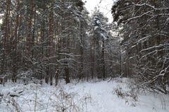 Tronchi degli alberi in una foresta abbandonata di inverno Fotografie Stock Libere da Diritti