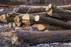 Tronchi del legname sulla terra immagini stock