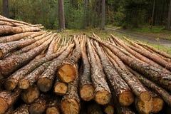 Tronchi del pino fotografia stock libera da diritti