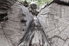 Tronchi del taglio degli alberi ed impilati fotografie stock libere da diritti