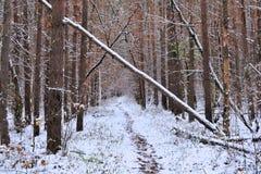 Tronchi dell'albero forestale di inverno La diga collega la foresta immagine stock libera da diritti